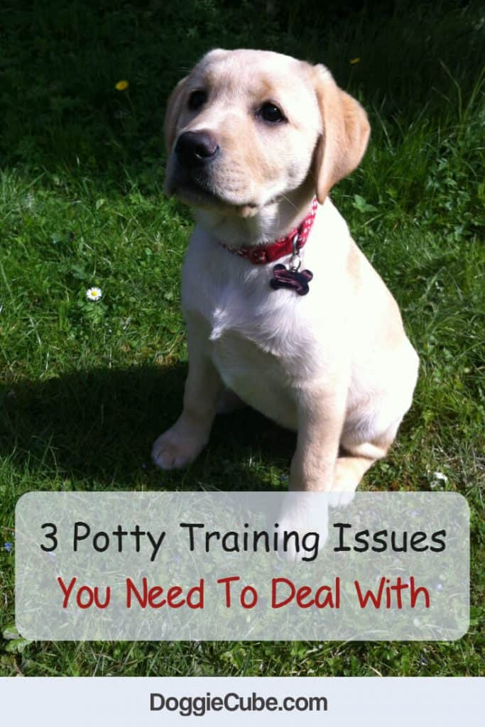 3 potty training issues you need to deal with