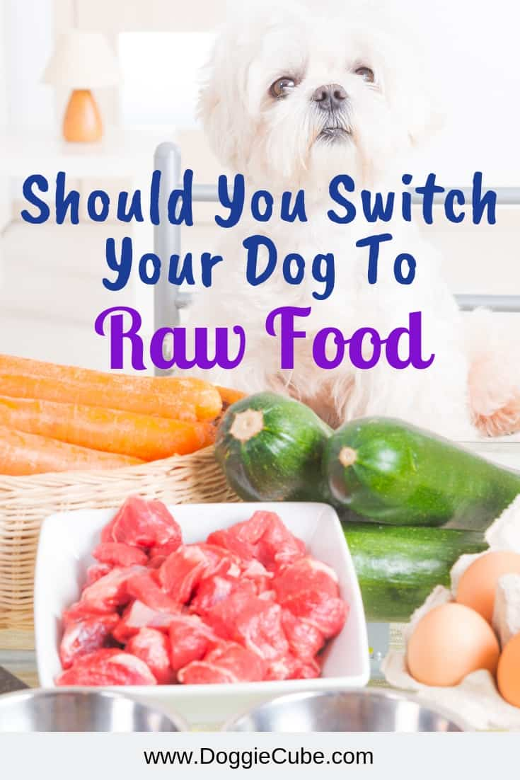 Should you switch your dog to raw food?