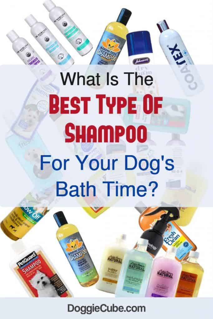 What is the best shampoo for your dogs