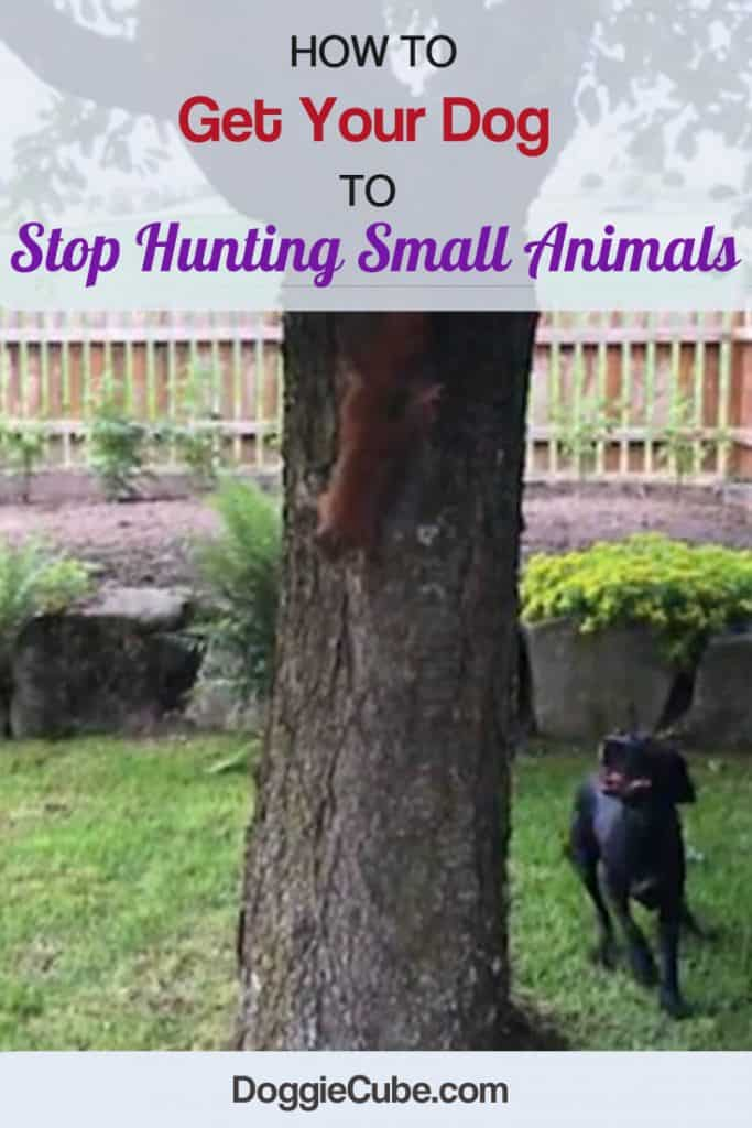 How To Get Your Dog To Stop Hunting Small Animals