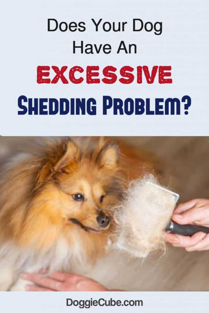 Excessive shredding problem in dogs