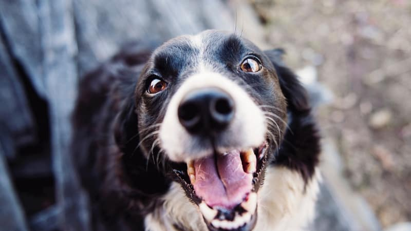 Excited dog