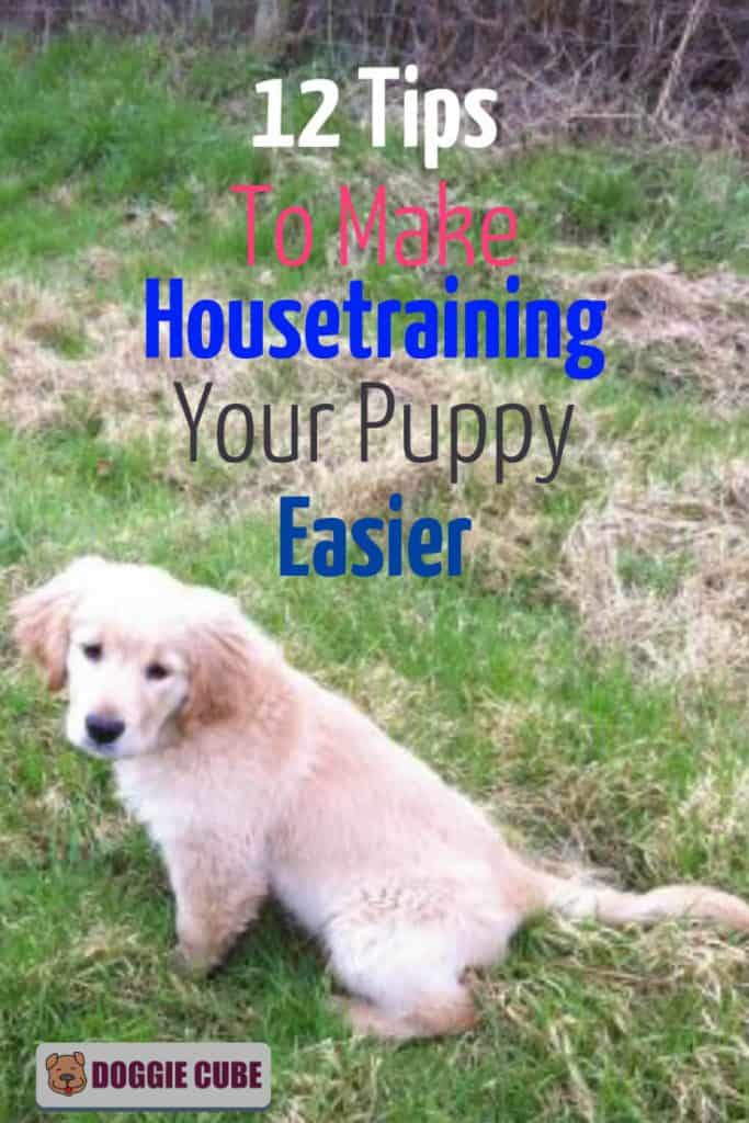 Housetraining puppy tips to make training your puppy easier