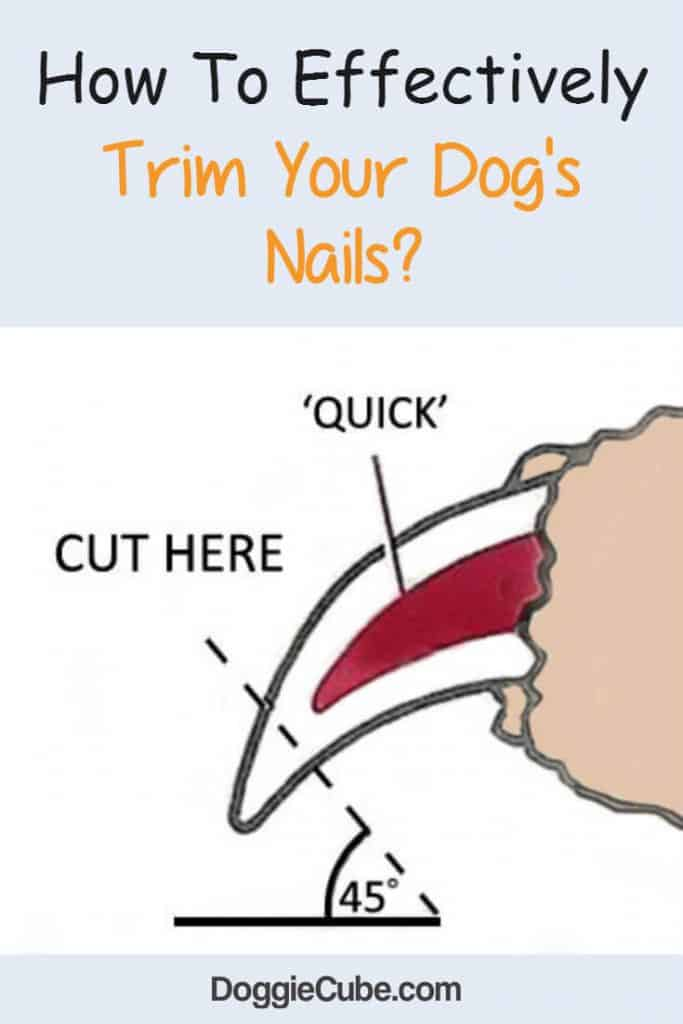 How to effectively trim your dogs nails