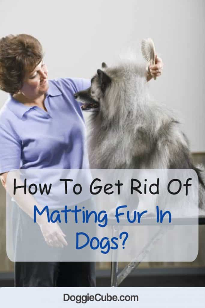 How to get rid of matting fur In dogs?