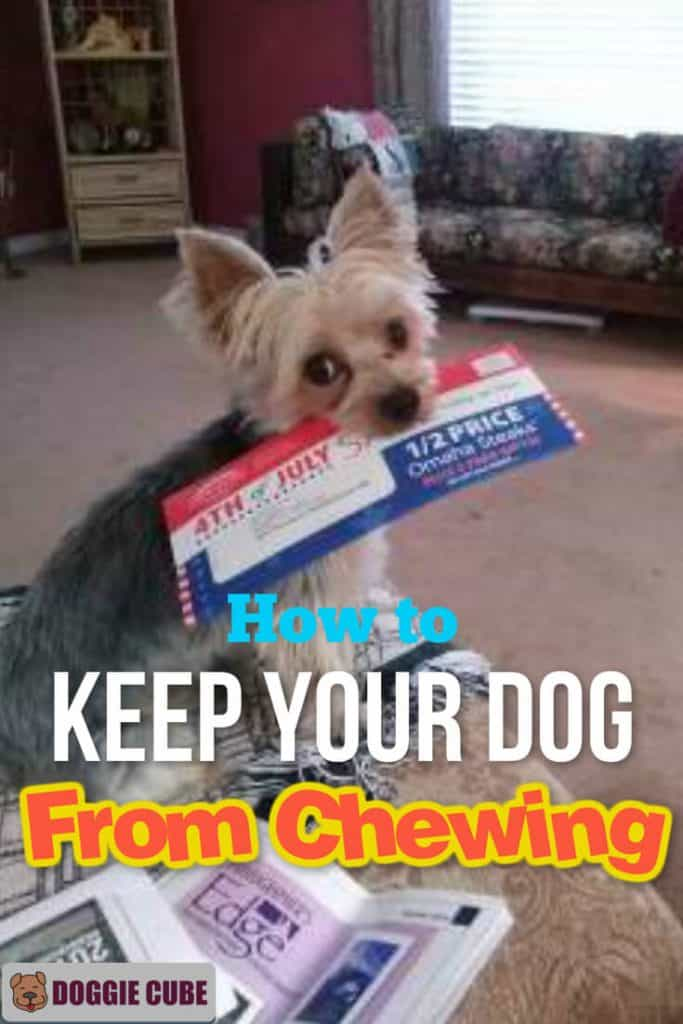 How to keep your dog from chewing