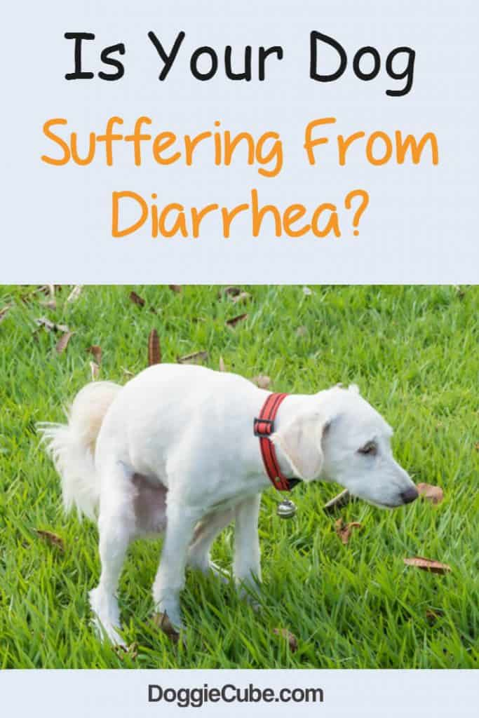 Is your dog suffering from diarrhea?