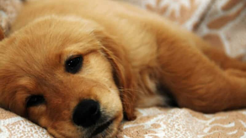 How Much Is It To Get Your Dog Vaccinated