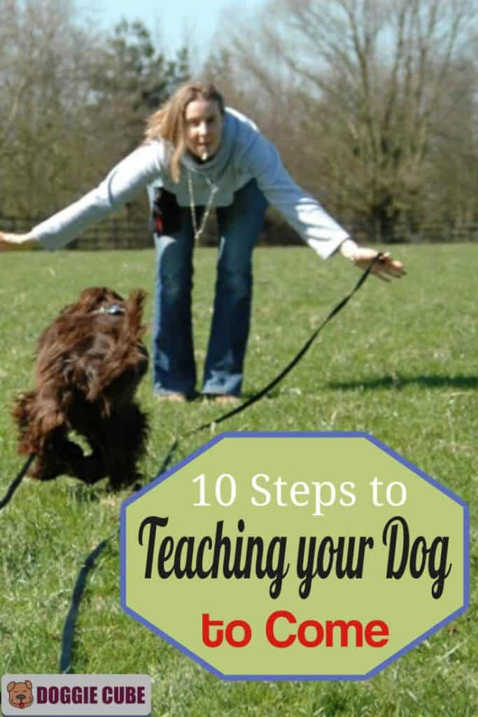 Tips on teaching your dog to come when called.
