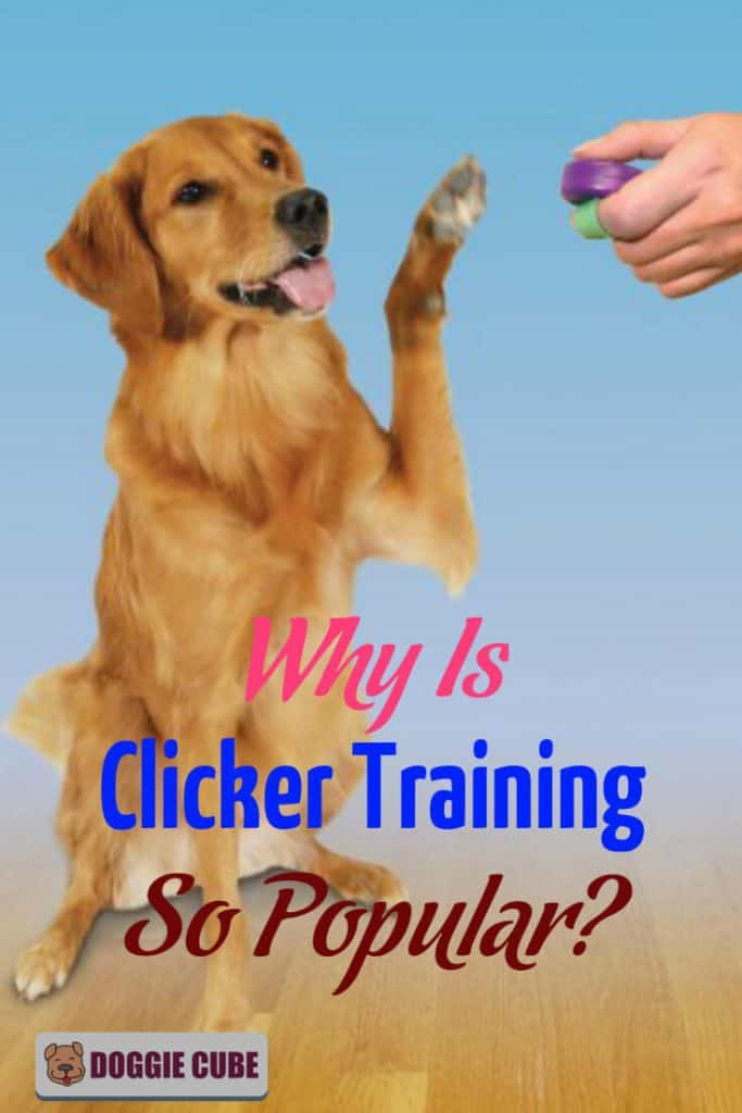 Why clicker training is so popular in dog training?