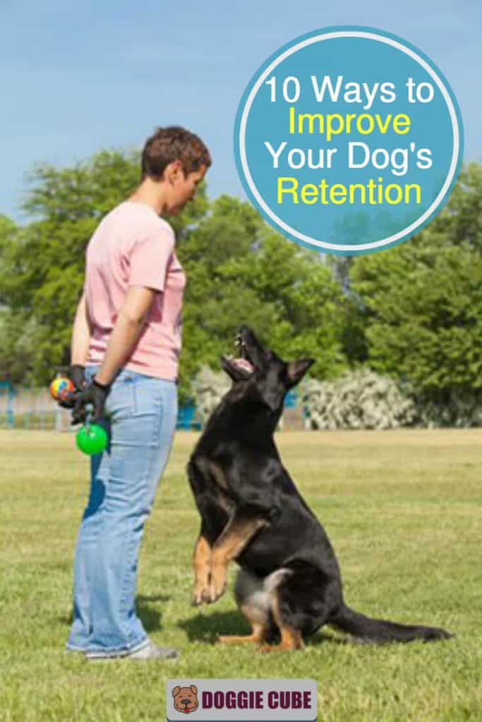 10 Ways to improve your dog's retention