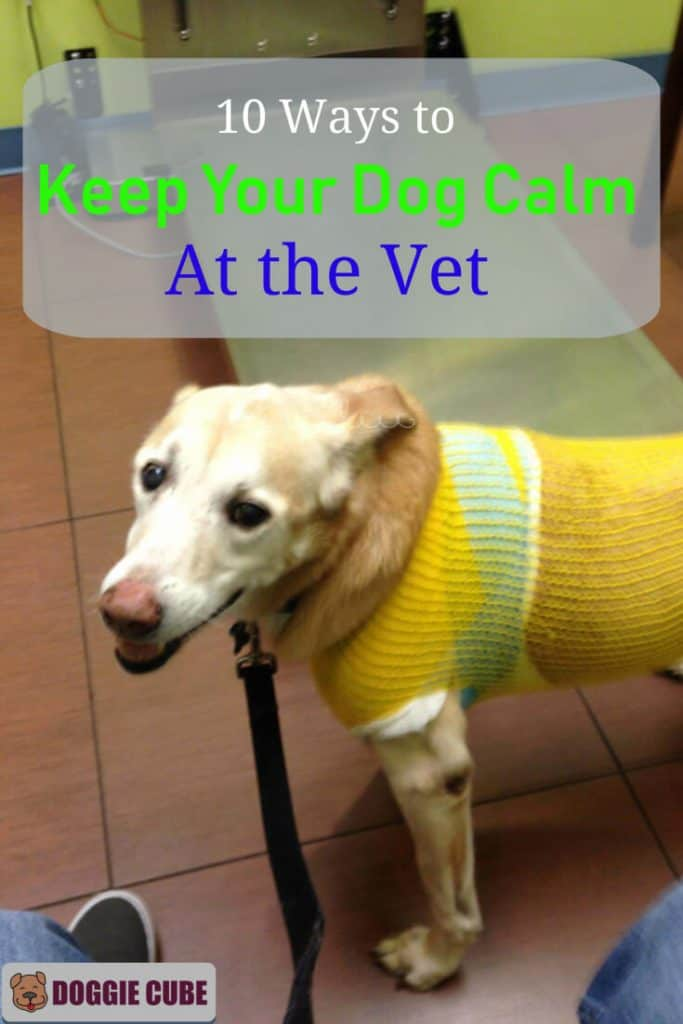 10 Ways to keep your dog calm at the vet