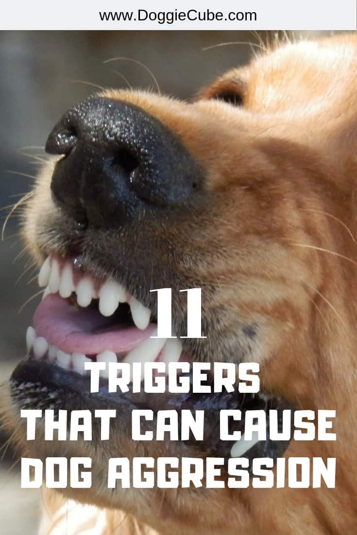 11 triggers that may cause dog aggression