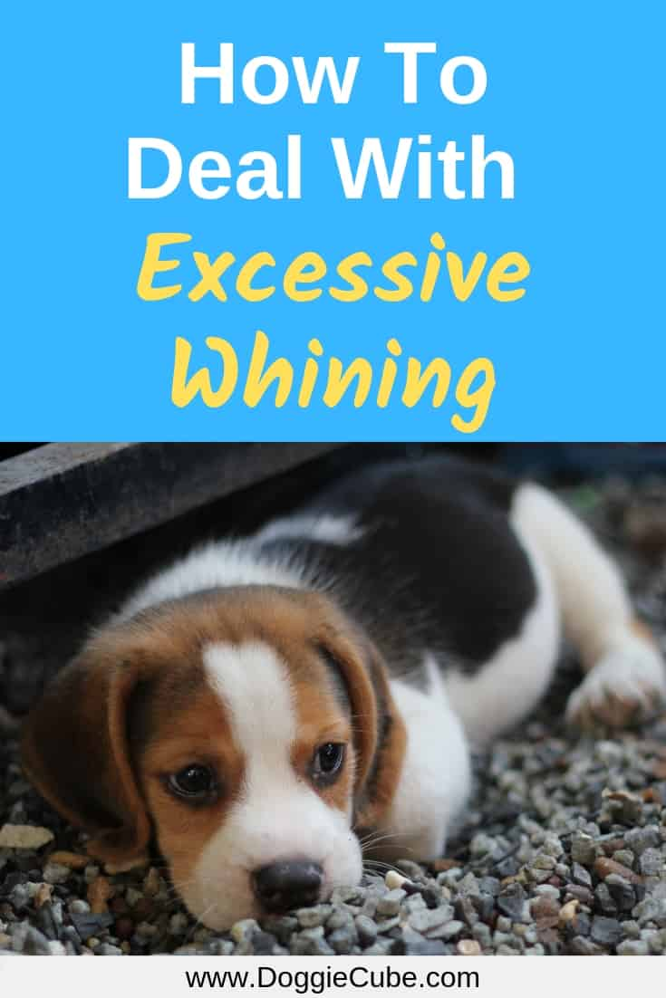 How to deal with excessive whining in dogs?