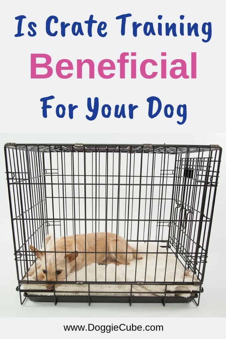 Is Crate Training Beneficial For Your Dog