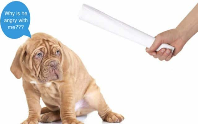 Confused about punishment during dog training