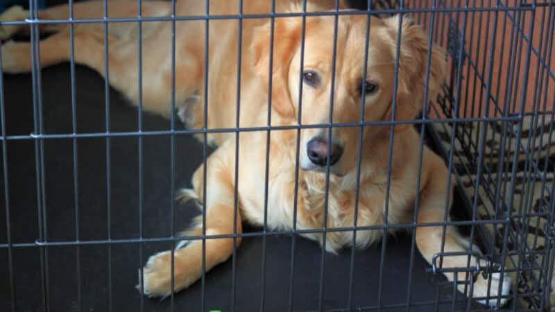 Crate training a puppy or dog