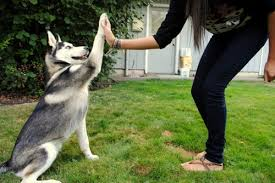 Dog training retention