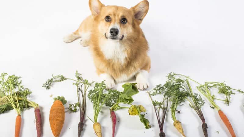 Ingredients in dog food