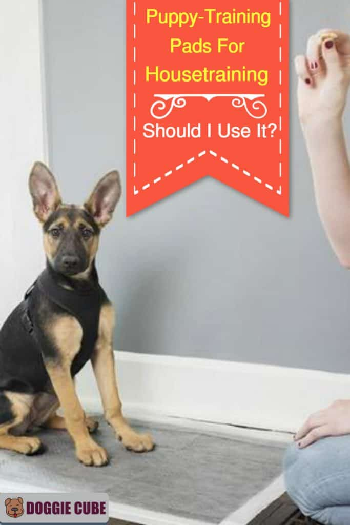 Puppy-training pads for housetraining