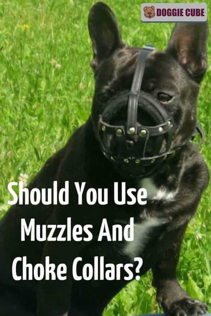 Should You Use Muzzles And Choke Collars?
