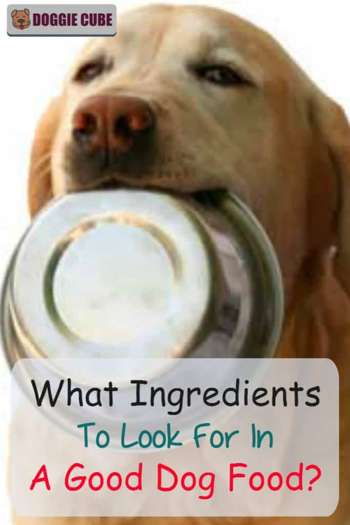 What ingredients to look for in good dog food