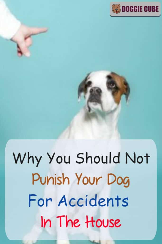 Why you should not punish your dog for accidents in the house