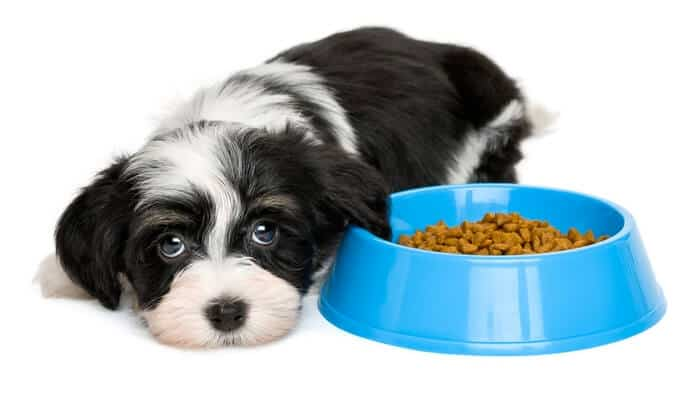 Dog not eating his food