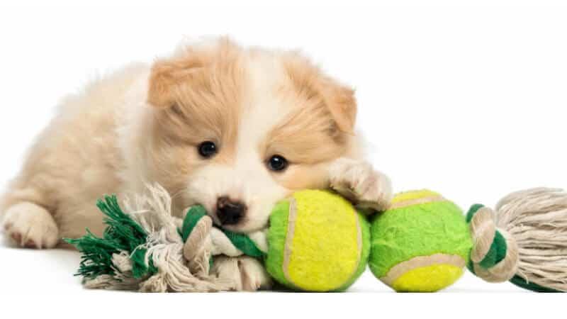 Puppy toy supplies