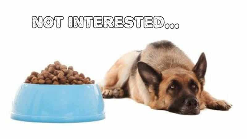 How To Get A Fussy Dog To Eat