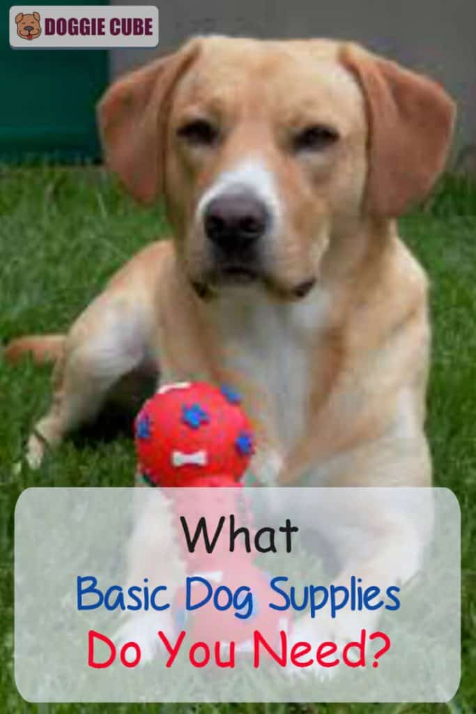 What basic dog supplies do you need?