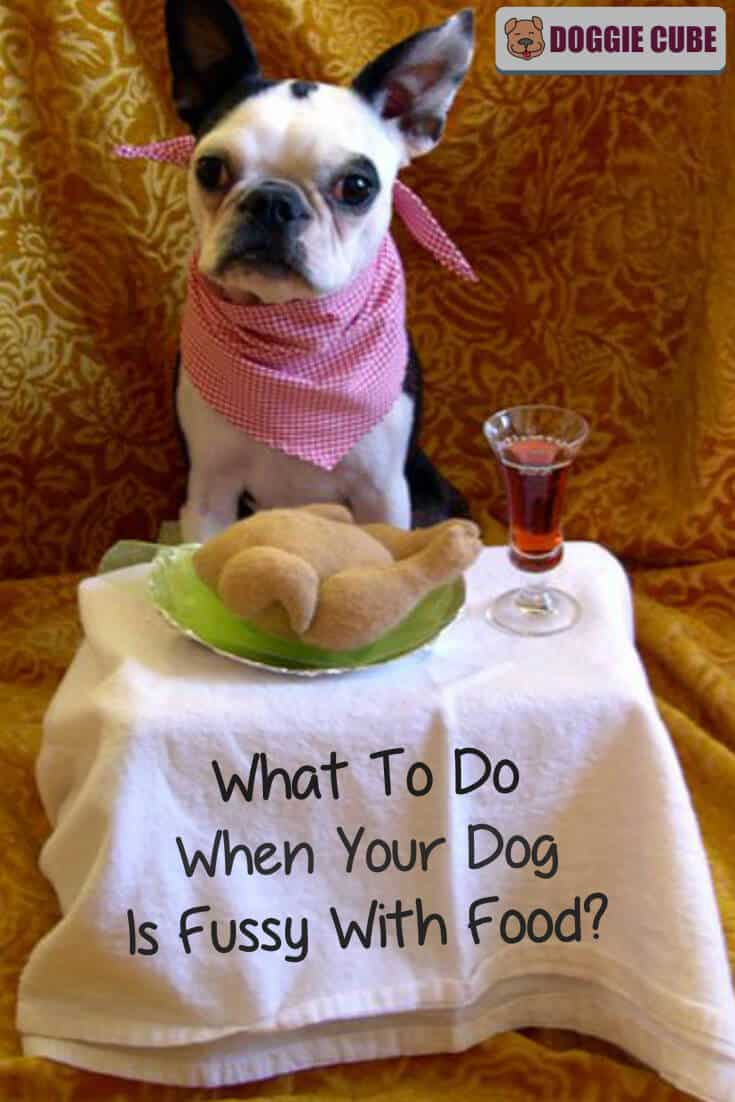 What to do when your dog is fussy with food?