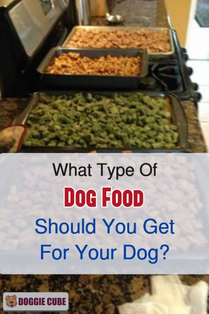 What type of dog food should you get for your dog?