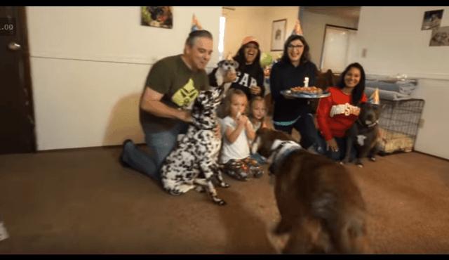 boxer birthday party