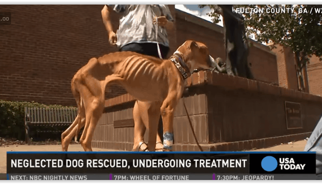 neglected dog tied to fence