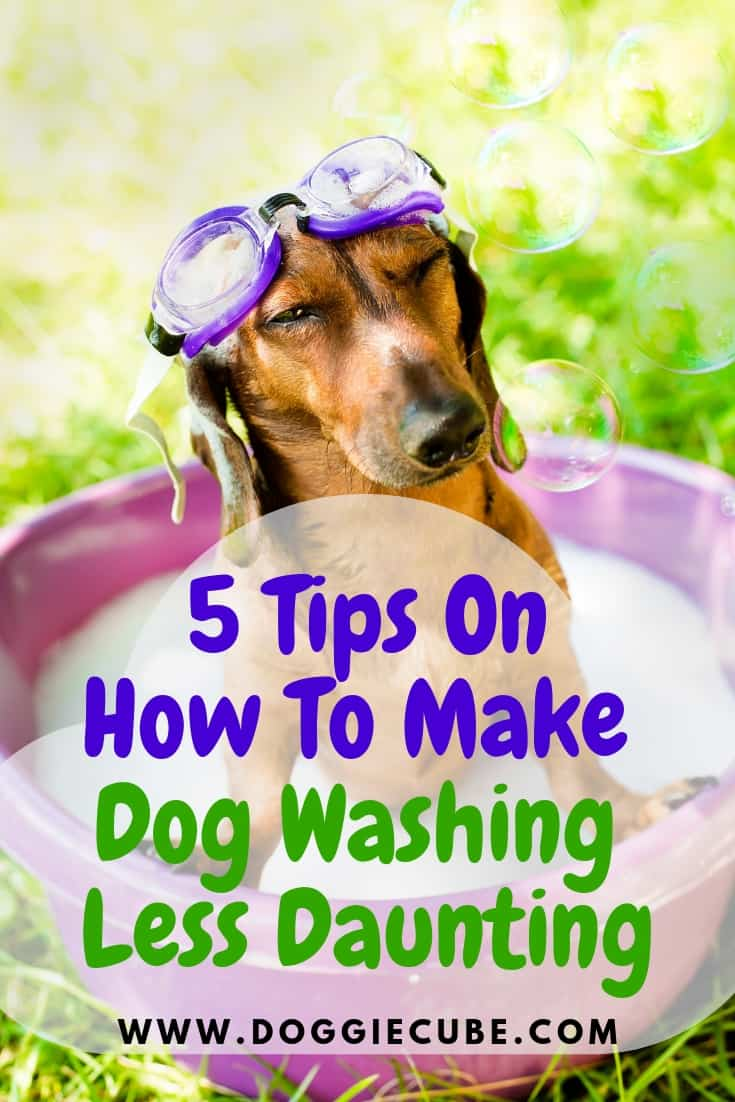 5 Tips on how to make dog washing less daunting