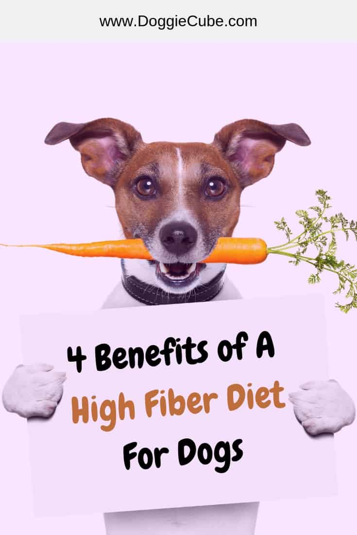 Benefits of a high fiber diet for dogs