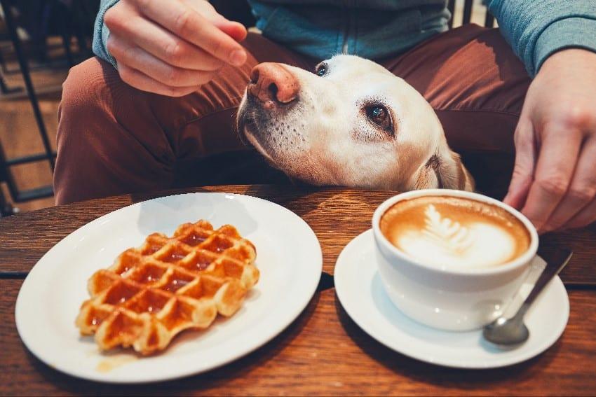 Feeding Table Scraps To Dog
