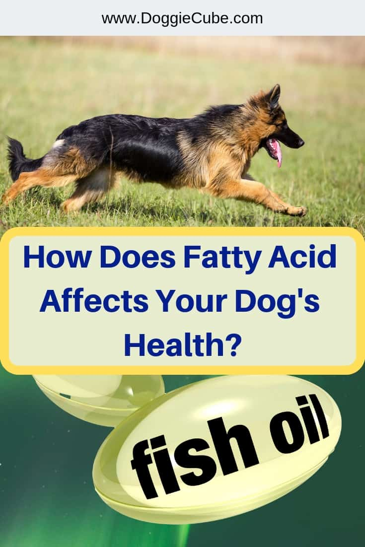 How does fatty acid affects your dog's health