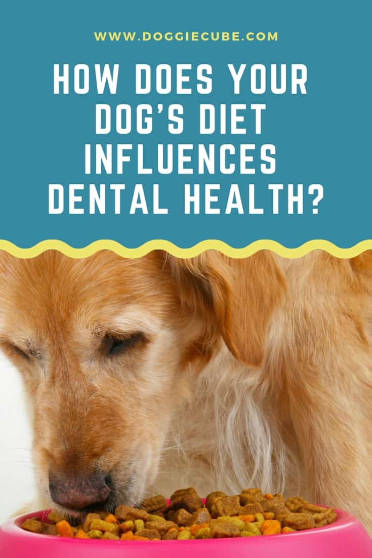 How does your dog's diet influences dental health?