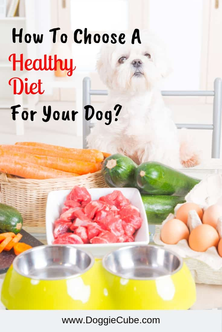 What should be in the recipes of a healthy diet for dogs? Animals need healthy food, just like humans. Healthy pet food will promote weight loss in overweight dogs. #healthydietfordogs #healthydogs