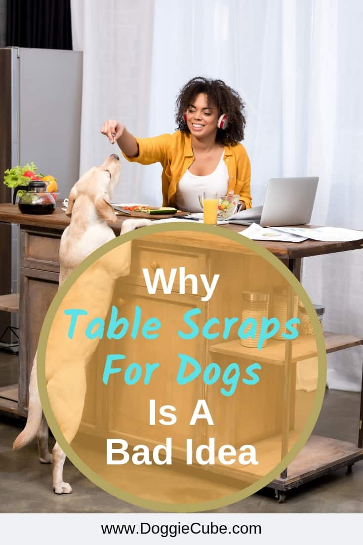 Why table scraps for dogs is a bad idea?