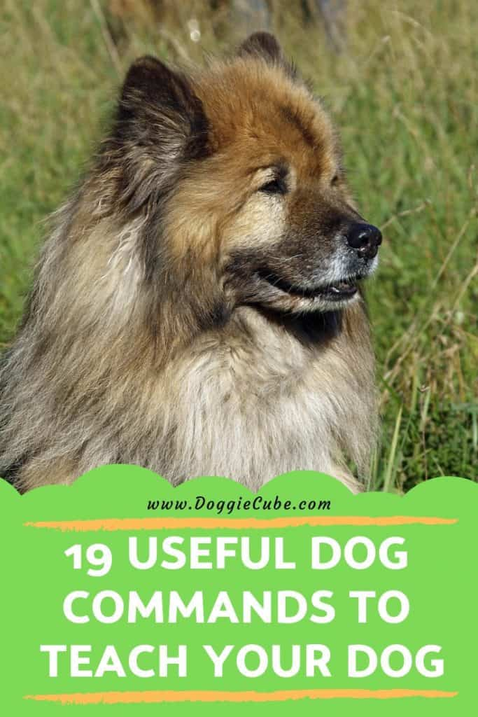 19 useful dog commands you can teach your dog.