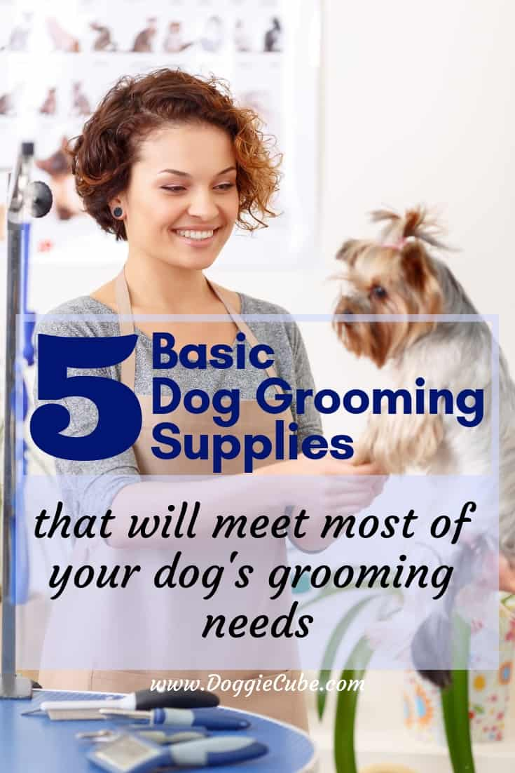 5 Basic dog grooming supplies that will meet most of your dog's grooming needs