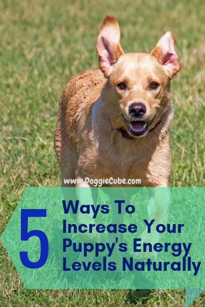 5 ways to increase your puppy's energy levels