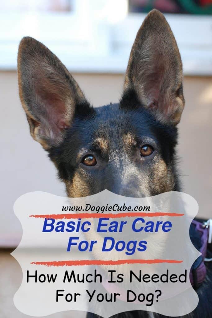 Basic ear care for dogs