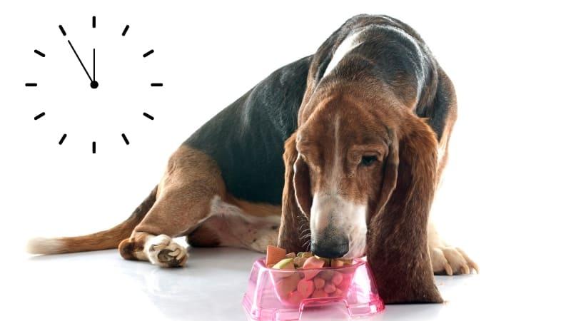 Dog Feeding Schedule