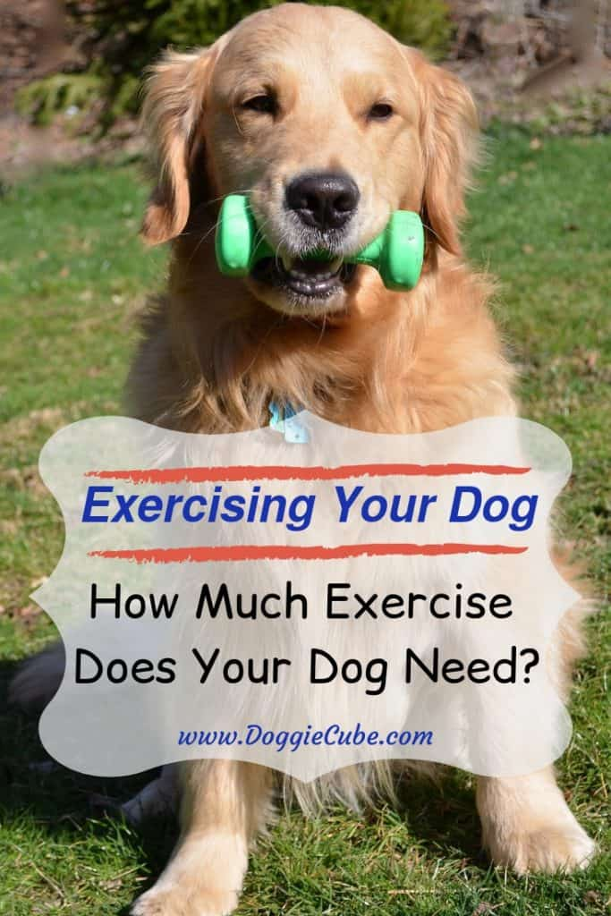 Exercising your dog can be fun.