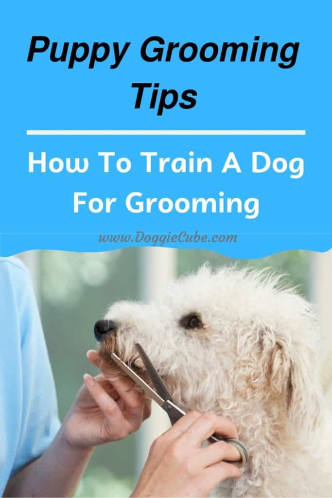 Puppy grooming tips - How to train a dog for grooming