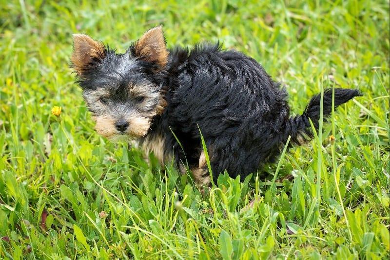 dog diet affects dog poops